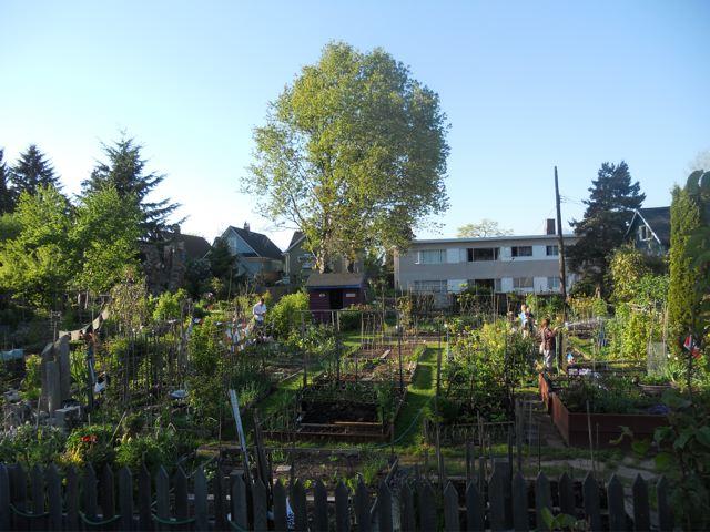 communitygarden
